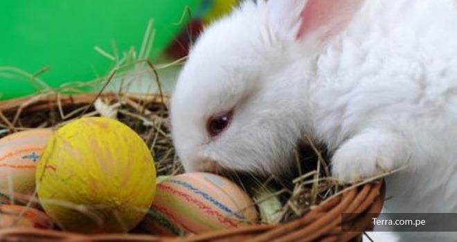 El origen de los huevos de pascua smallville for El conejo de pascua